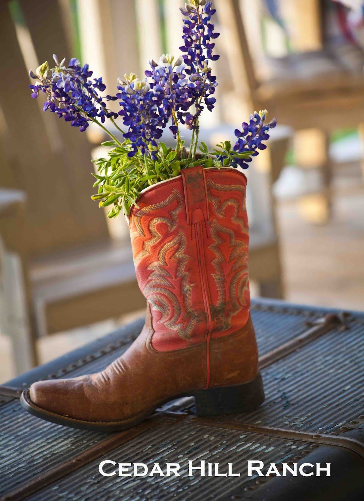 Could use me and ccs wildflower boots as vases look for mason texas bluebonnets in cowboy boot cedar hill ranch wildflower party back porch floridaeventfo Images