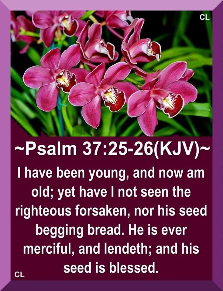 Psalm 37: 25-26 KJV | bible verse | Pinterest