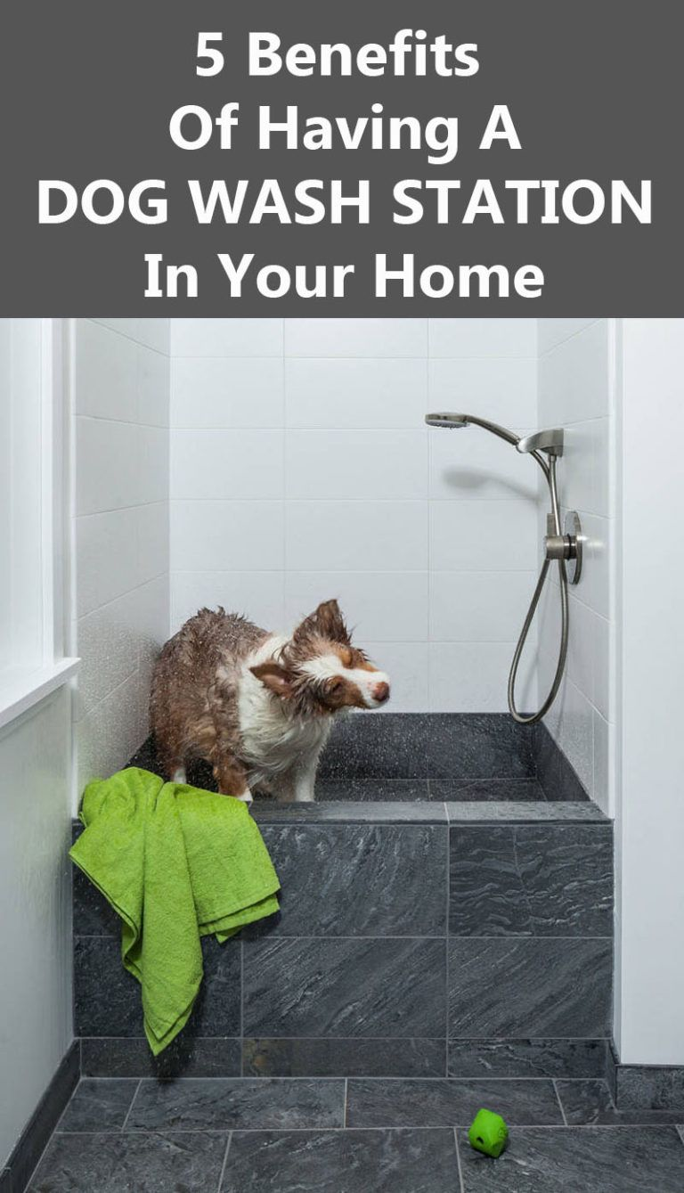 5 benefits of having a dog wash station in your home dog washing 5 benefits of having a dog wash station in your home solutioingenieria Gallery