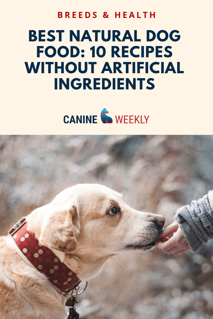 10 Best Natural Dog Food For 2020 Foods Without Fillers Natural Dog Best Natural Dog Food Natural Dog Food