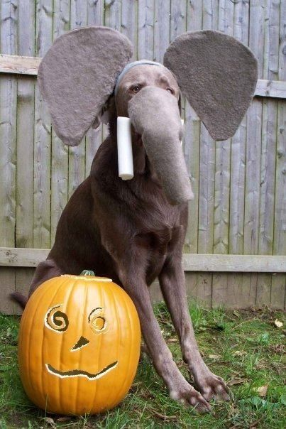 Dog Costume: Elephant Dog! | Dogs Costumes | Pinterest ...