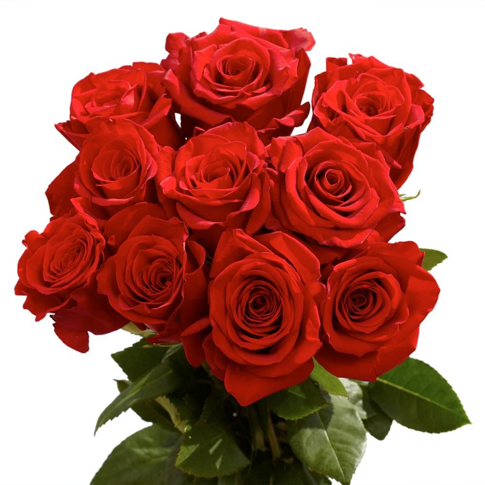 Globalrose Fresh Red Roses Best Of The Best 125 Extra Long Stems Super Premium Roses Freedom 125 The Home Depot Red Flower Bouquet Types Of Roses Dozen Red Roses