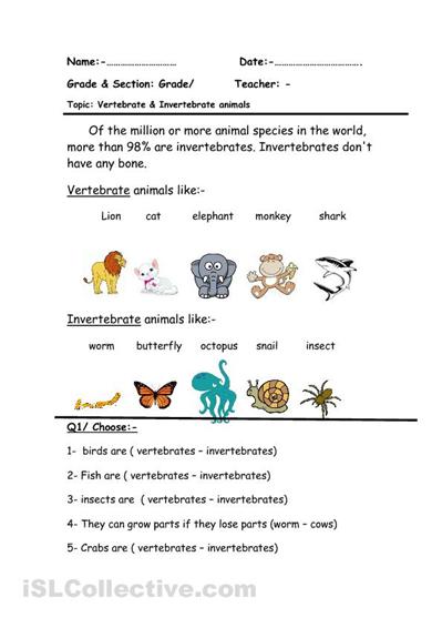photo regarding Free Printable Worksheets on Vertebrates and Invertebrates named Vertebrate pets Creating worksheets, Totally free printable