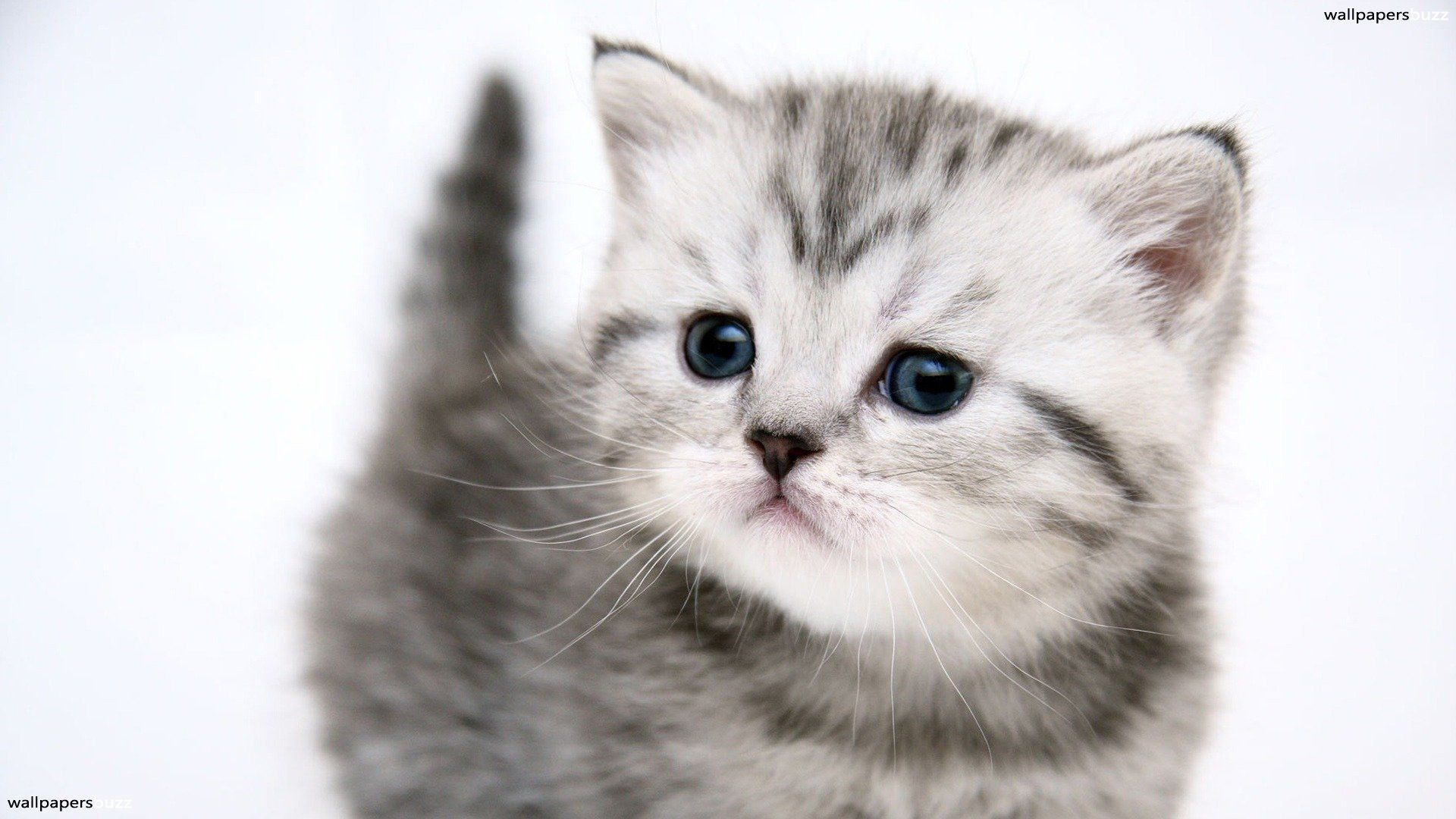 Cat 50 Free Hd Cat Wallpapers Newevolution Cute Baby Cats