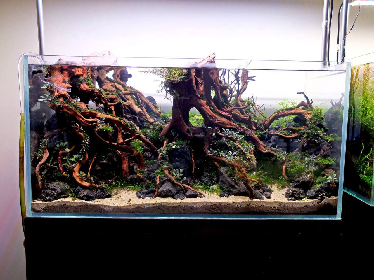 Elegant Summary: A Sight Of An Aquarium With All The Colorful Fishes Is A Sight To  Behold. Now, With Internet, You Can Also Buy Tropical Fish Online.