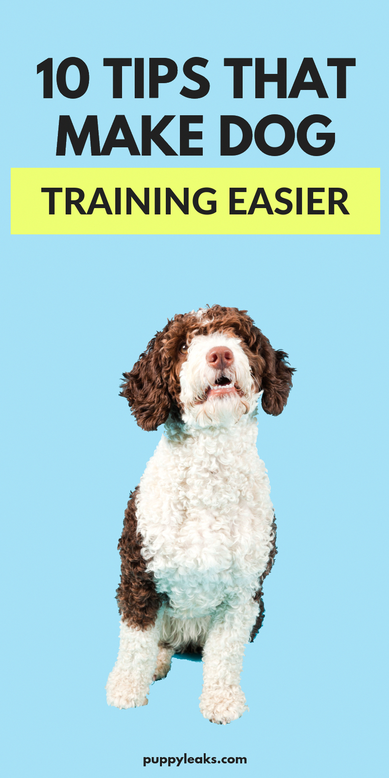 dog info,dog care,dog stuff,dog training dogcare Dog
