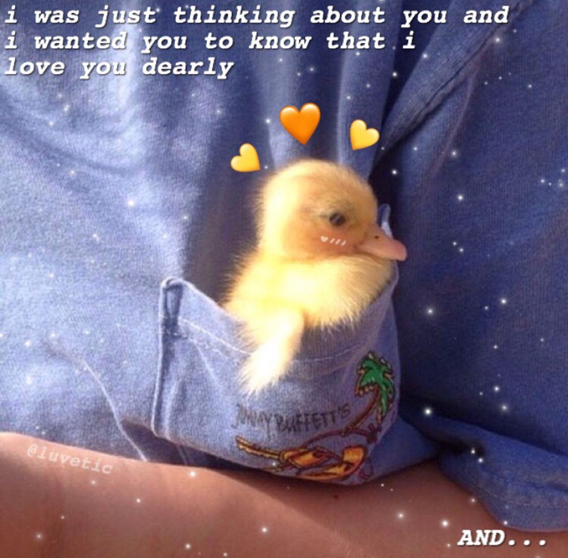 Pin Xcharlottc Cute Love Memes Love Memes Cute Memes