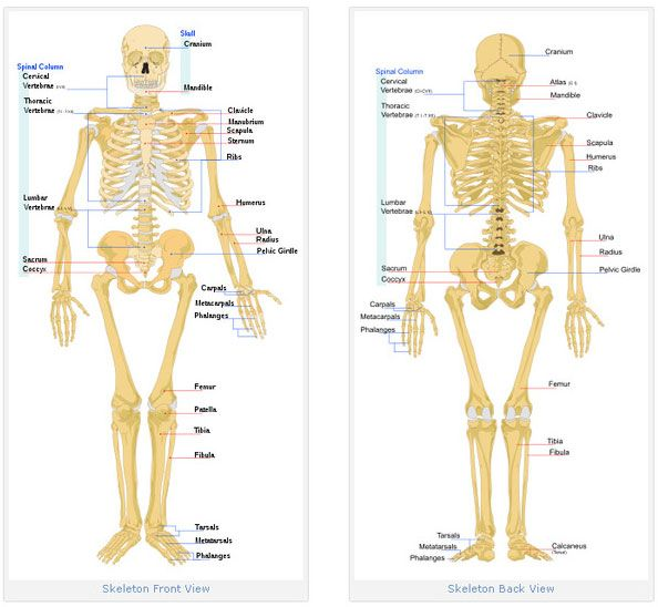 parts of human body bones. find out its uses and function in our,