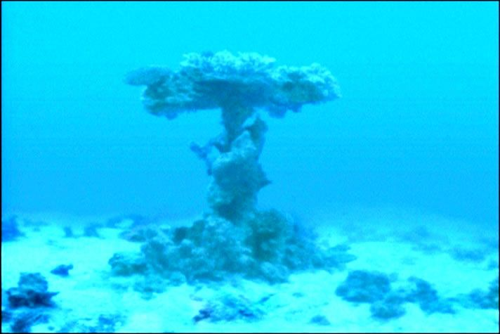 Red sea crossing evidence chariot