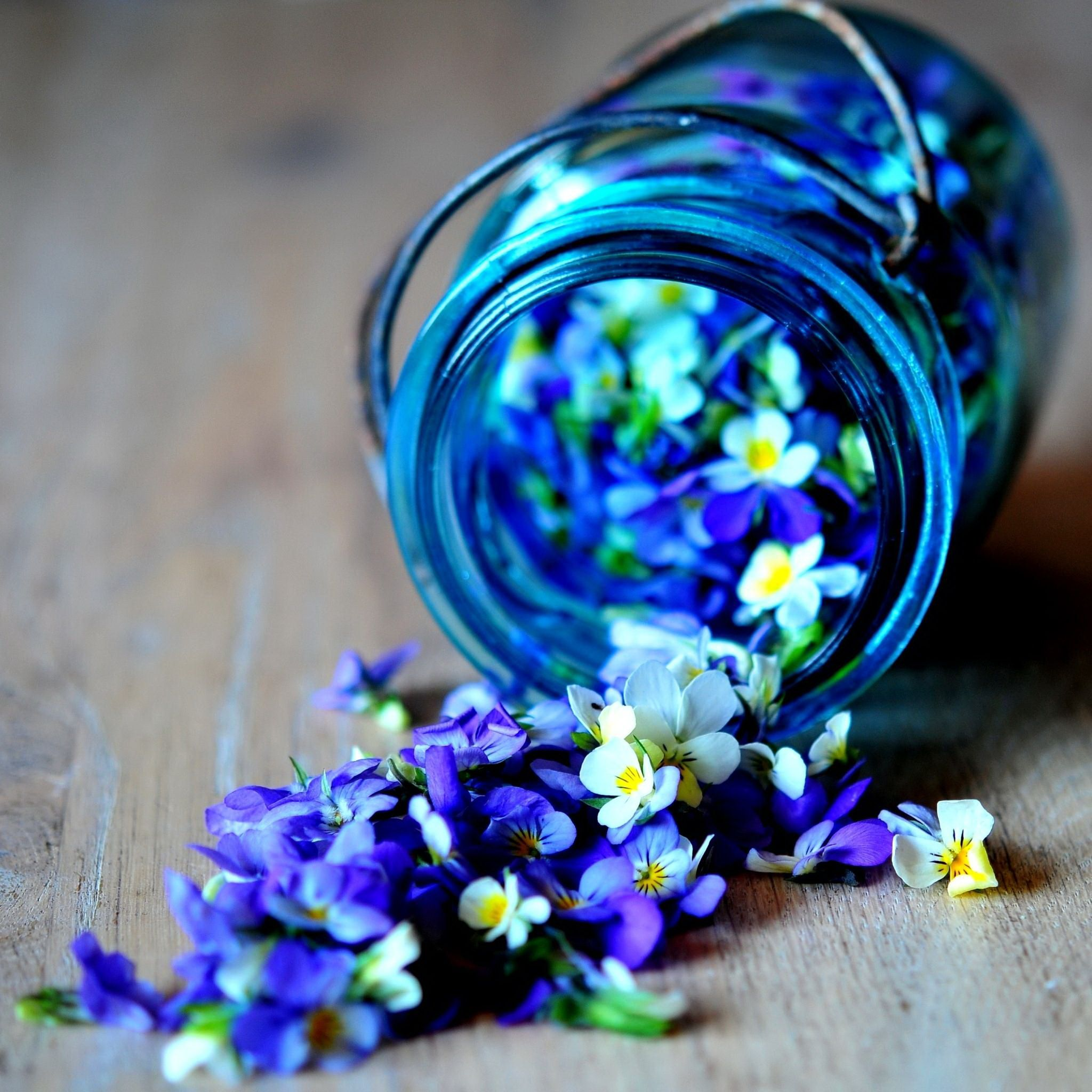 My Ipad Retina Wallpaper The One I Just Liked Beautiful Flowers Flowers Purple Flowers