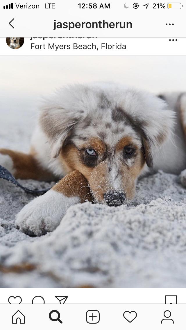 Pin By Elizabeth Scott On Dogmom Fort Myers Beach Fort Myers Dog Mom