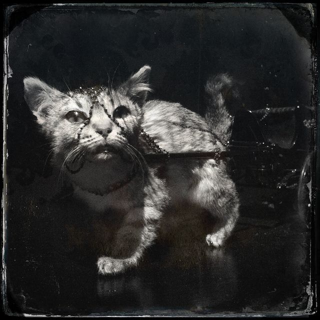 Kitten. Julia deVille Degustation at NGV #melbournenow | Flickr - Photo Sharing!