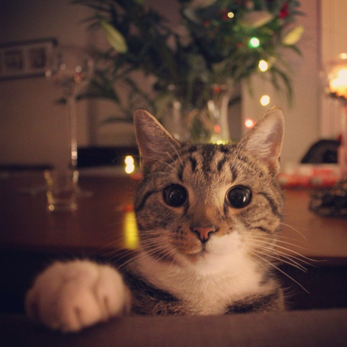 Three Holiday Hazards for Pets to Avoid This Season Pet