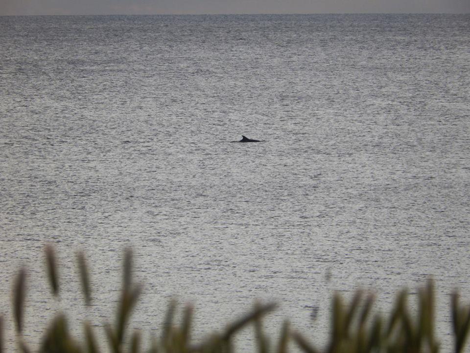 Delphin heute vor Pula www.inistrein.hr #Delphin #Pula #Istrien #Natur