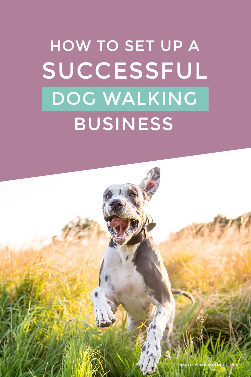 How To Set Up A Successful Dog Walking Business