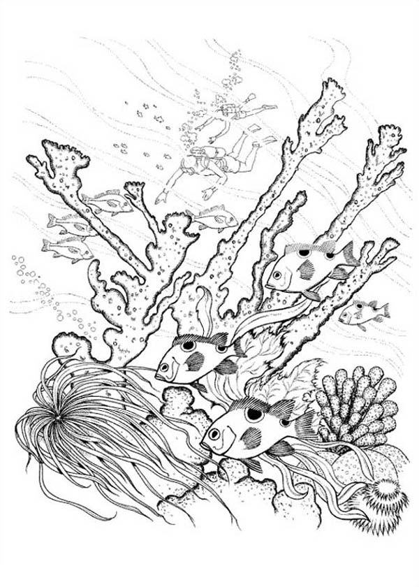 how to draw sea coral