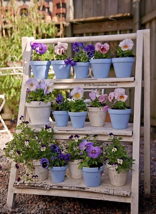purple/lilac pansies displayed on a cute 3 tiered wooden potting stand