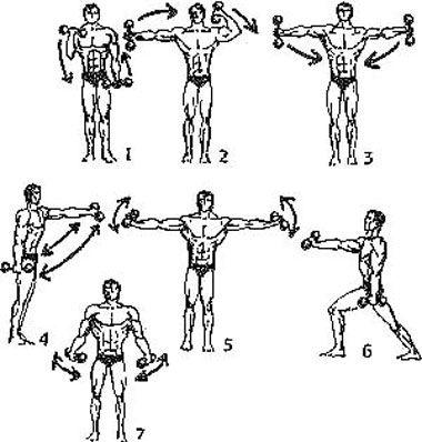 Упражнения с гантелями для рук | Упражнения, Гантели ...