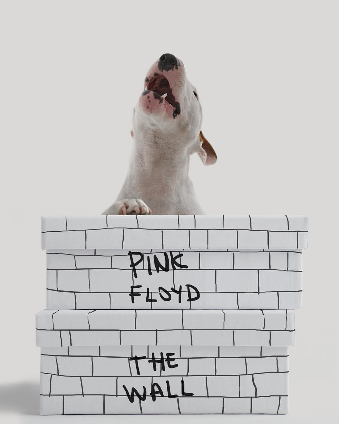 Pink Floyd- The Wall (Album Series) | Jimmy the Bulldog by