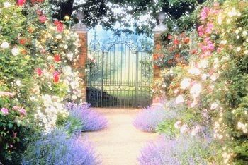 17 best 1000 images about Flower Gardens on Pinterest Gardens Garden