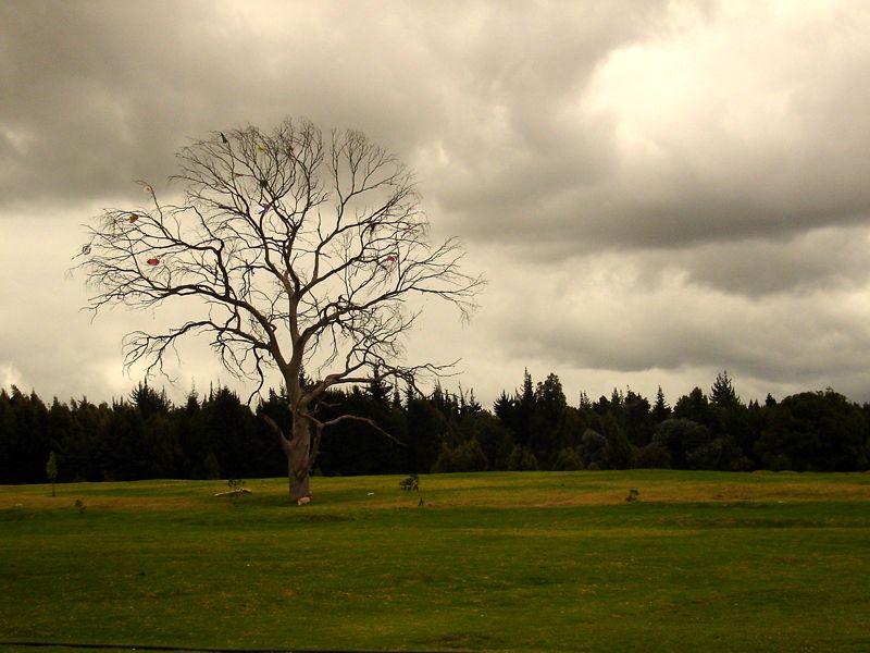 Un árbol contra el cielo posee el mismo interés, el mismo carácter, la misma expresión que la figura de un ser humano (G. Rouault)