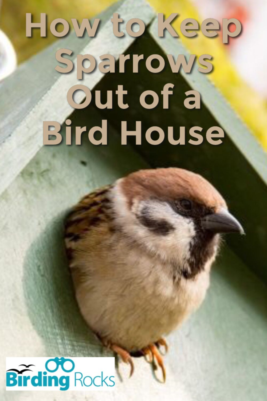 f7a0490181890af8658dd1af6492d602 - How To Get Rid Of Birds In Your Trees