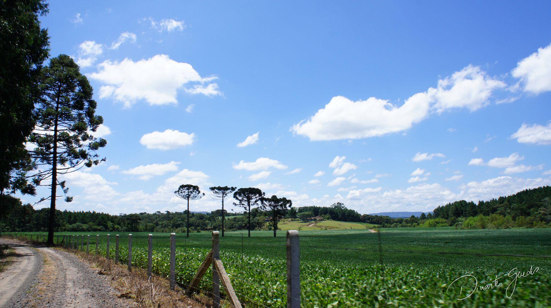 Vista rural típica de Porto União, localidade do Cachoeirinha.