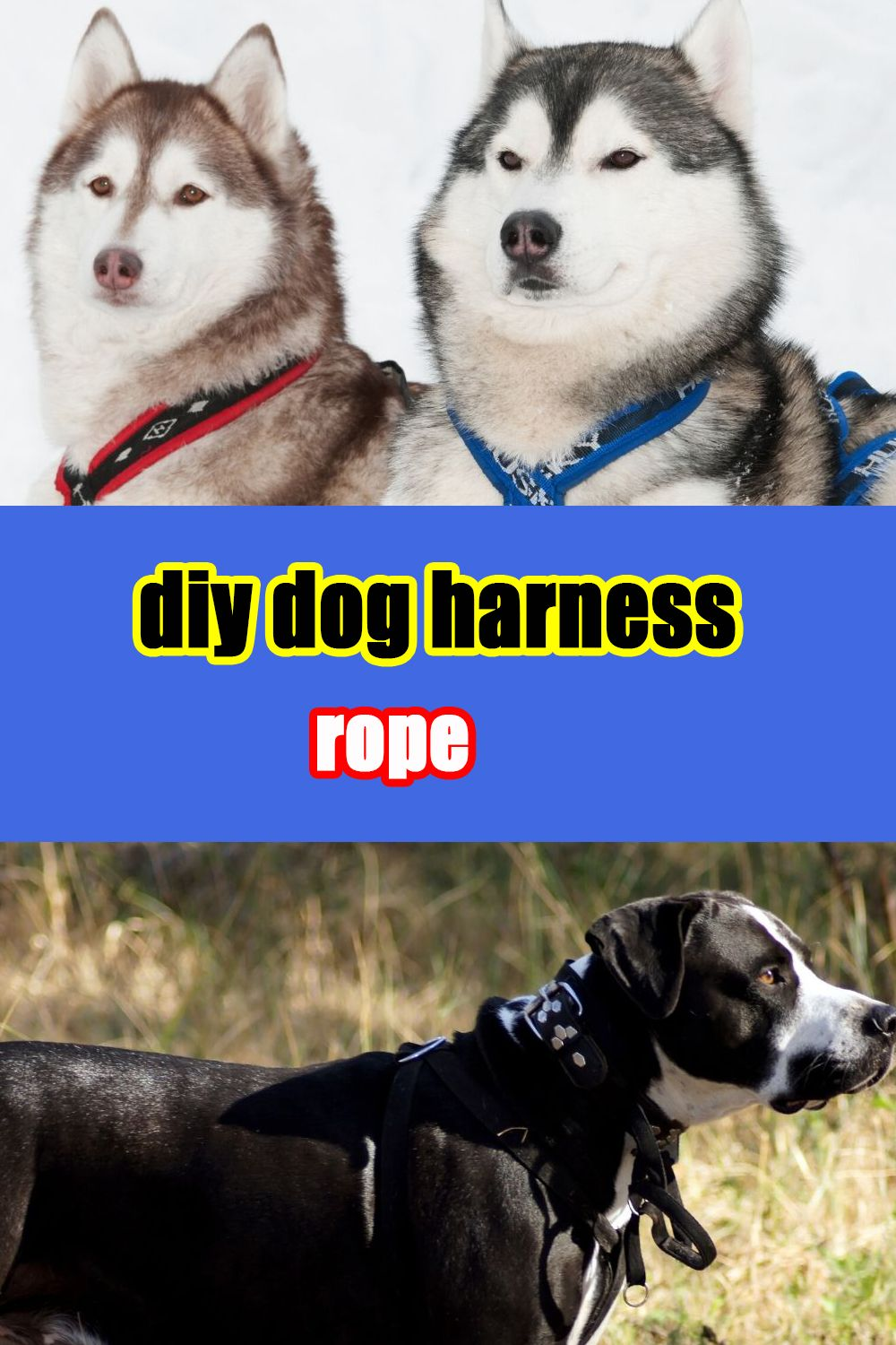 Diy Dog Harness Rope In 2020 Small Dog Harness Cute Dog Harness Dog Harness