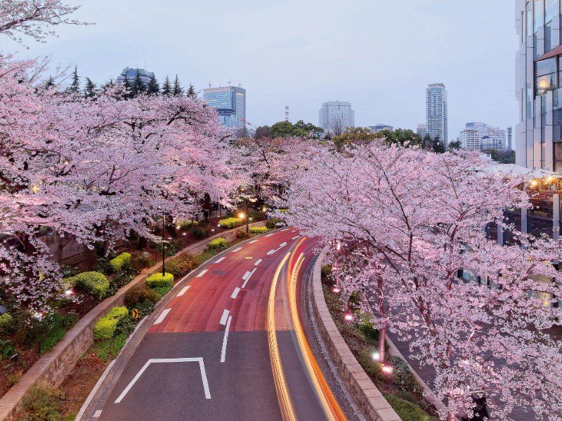 Where To Stay In Tokyo Top Neighborhoods For Every Traveler In 2021 Day Trips From Tokyo Scenery Tokyo Midtown
