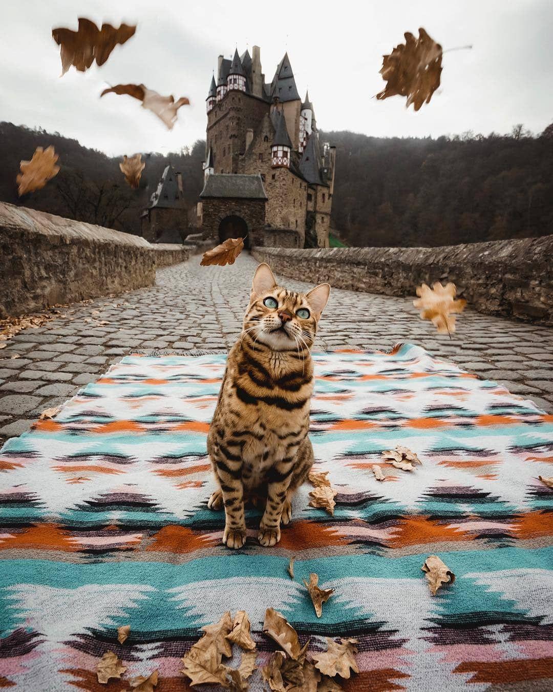 We Present Name Eltz Castle Wierschem Germany Photo By Sukiicat F Bengal Cat Adventure Cat Cat Personalities