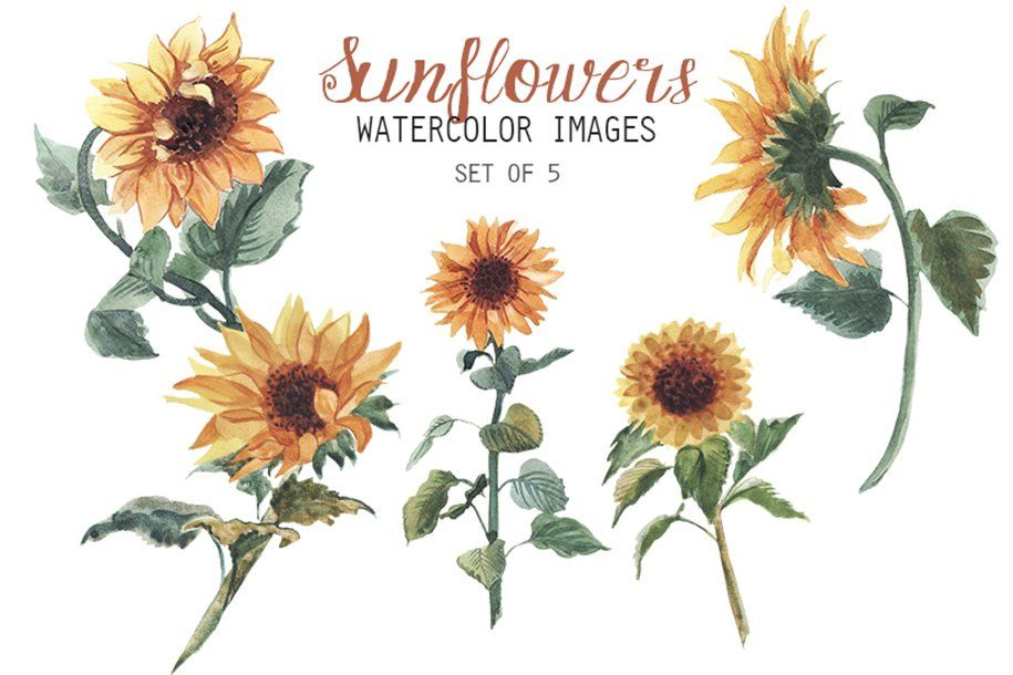 Watercolor Sunflowers Clipart Ad High Quality Dpi Images Ad