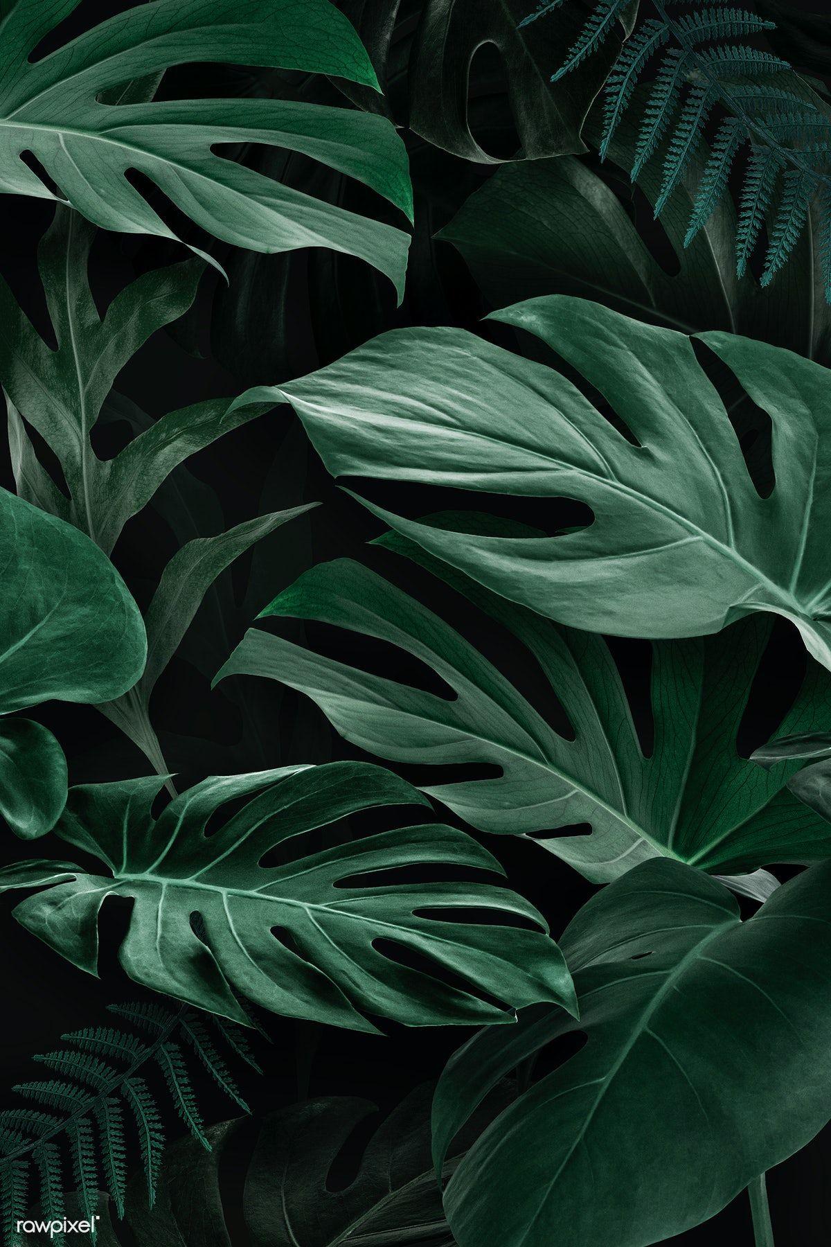 Download Premium Image Of Monstera Leaf Mobile Screen Wallpaper 1219973 Black Wallpaper Iphone Dark Phone Wallpapers Leaves Wallpaper Iphone
