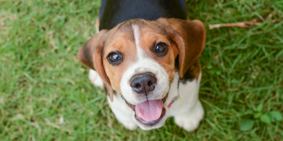 If You Recently Added A New Puppy To Your Pack Here Are Some Things To Know About Your Puppy S Emotio Dogs And Kids Best Dogs For Kids Most Popular Dog Breeds