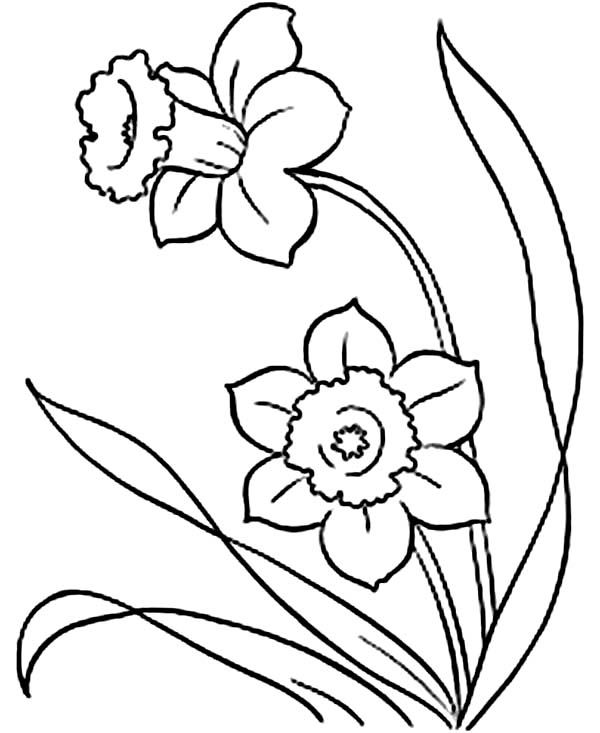 Daffodil Coloring Pages Free Coloring Pages Spring Coloring Pages Flower Coloring Pages Flower Drawing