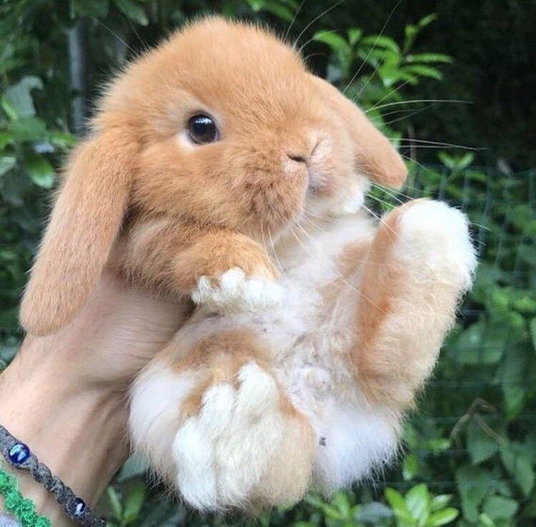 Beliebtes Spielzeug für Kaninchen (2018) | BUNNY SUPPLY CO #toysfordogs Beliebtes Spielzeug für Kaninchen (2018) | BUNNY SUPPLY CO #fabrictoys