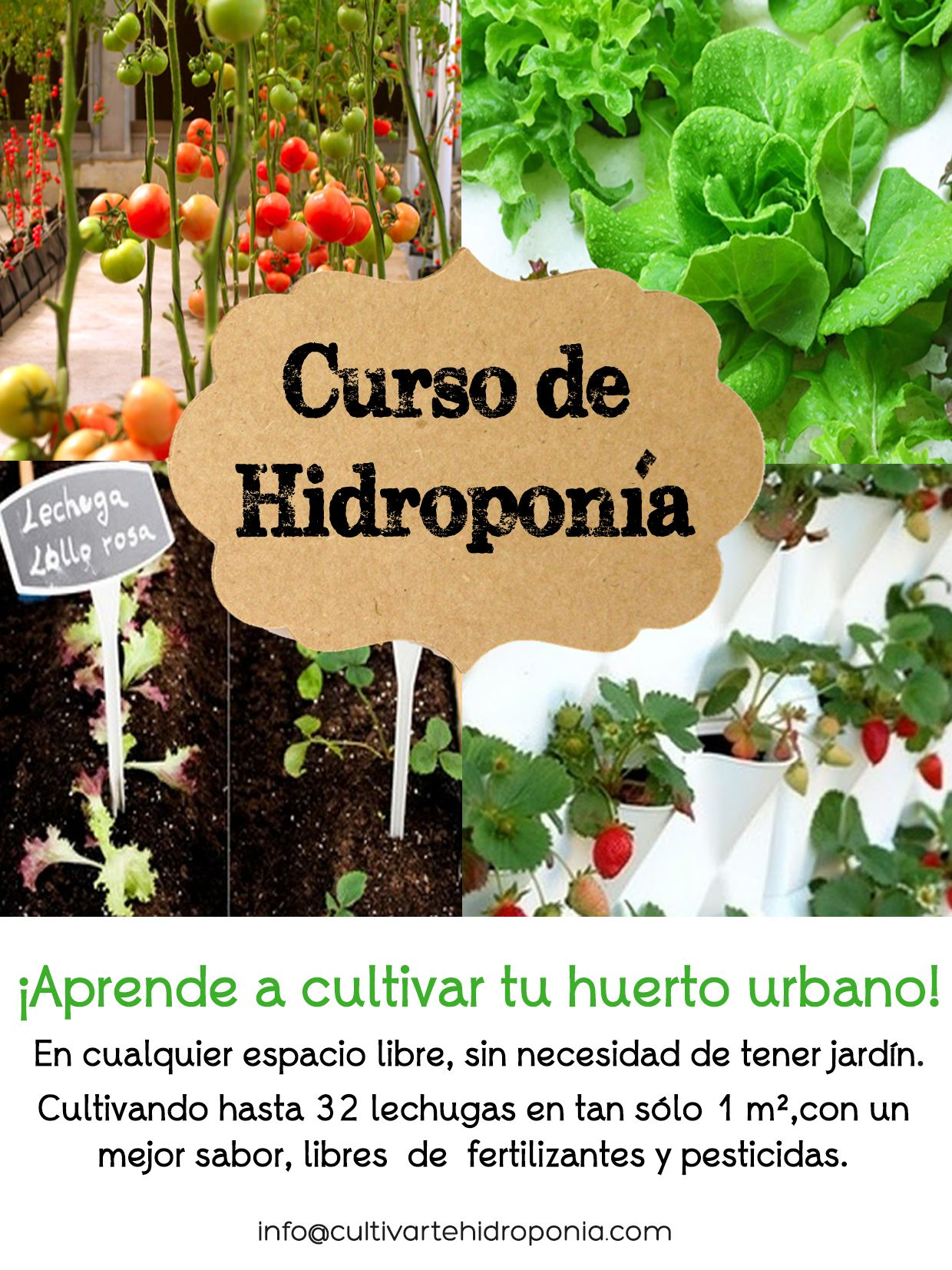 Curso Hidropona BsicoDescubre como cultivar hasta 32 lechugas en