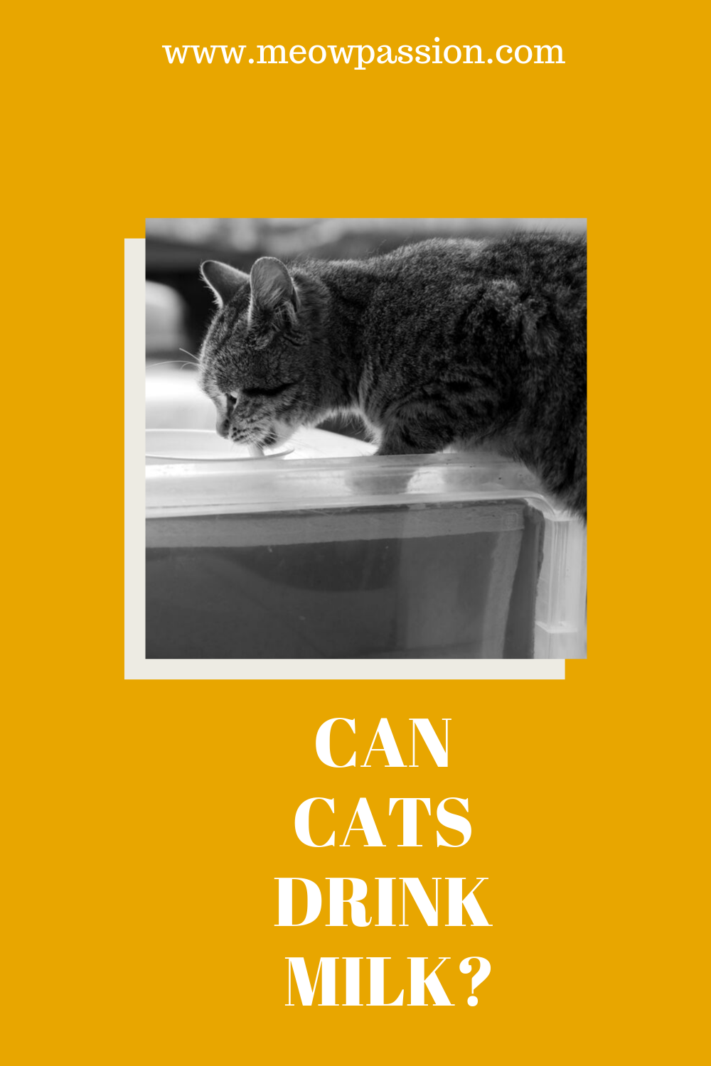 Human Foods That Are Toxic For Cats Meowpassion Cat Drinking Cats Drink Milk