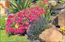 Waterwise Garden Plans South Africa Google Search In 2020 Waterwise Garden Garden Planning Garden