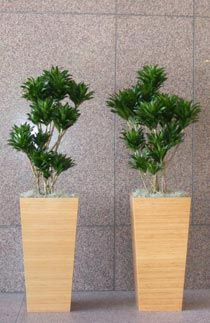 Interior Plants  Office Plant Rental and Interior Landscape Design     Interior Plants  Office Plant Rental and Interior Landscape Design
