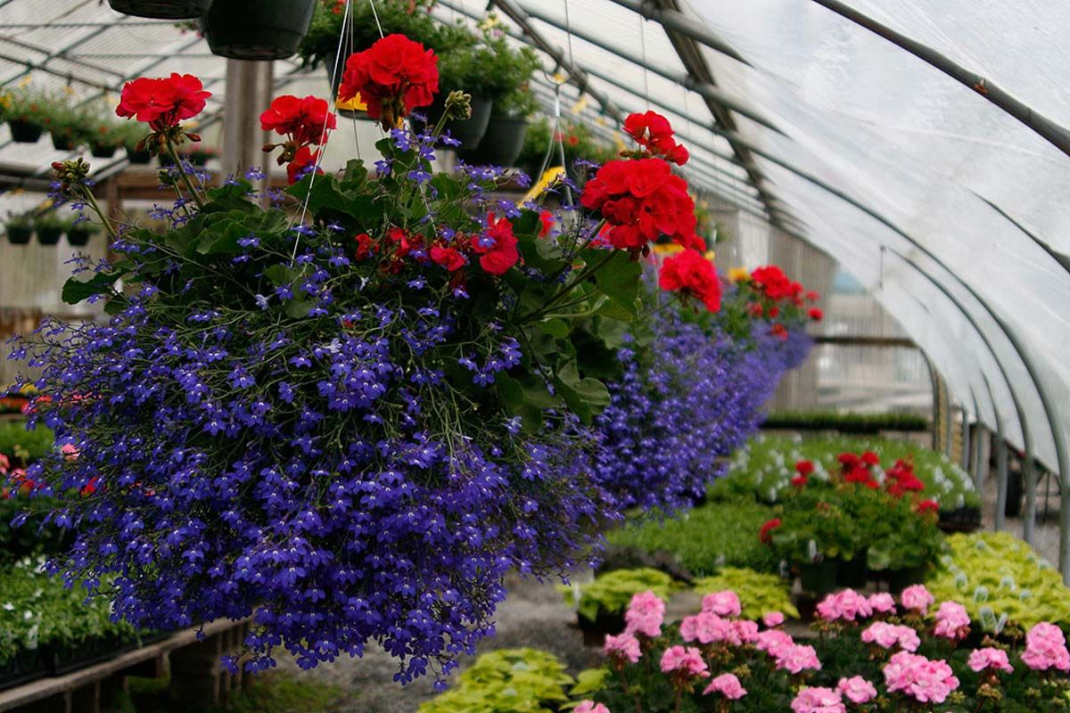 Five Local Nurseries To Your Plants This Season