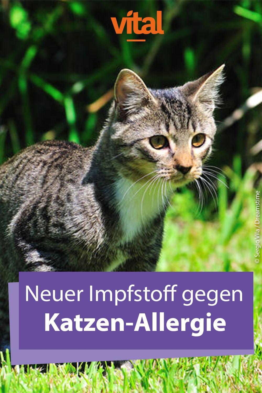 Bald soll es Impfstoff für Katzenallergiker geben