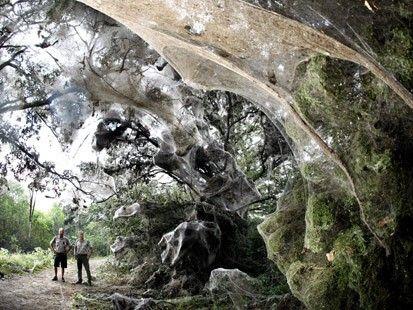 蜘蛛の巣 アート Google 検索 画像あり アート
