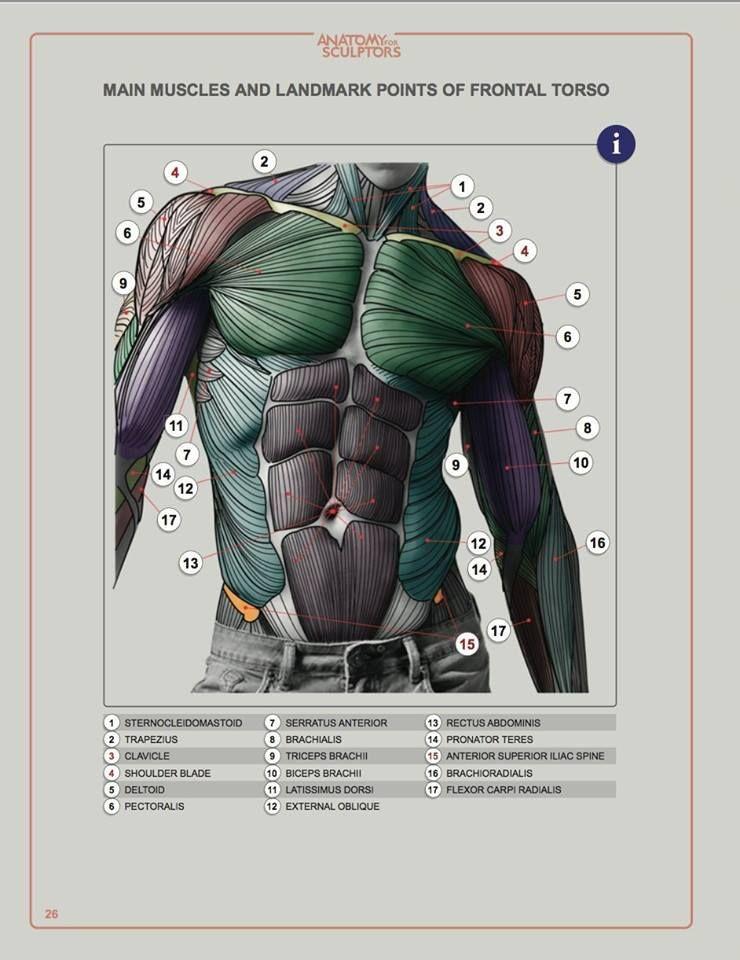 Book: Anatomy for Sculptors Understanding the Human Form | Sculpting ...