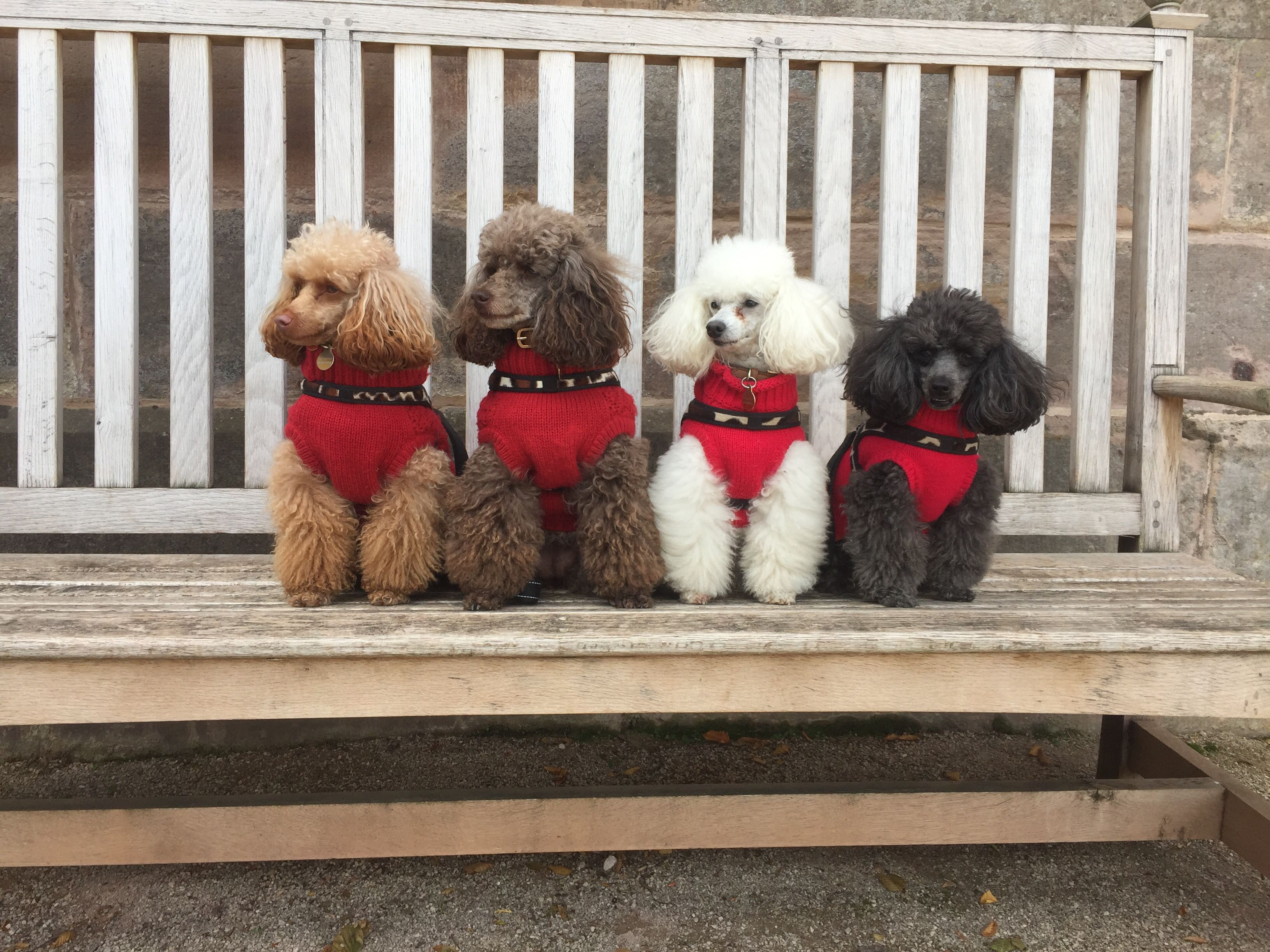 Corgi Puppies For Sale In Lynchburg Va References