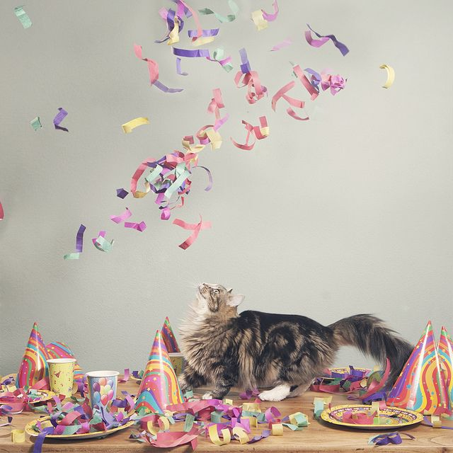 Confetti Cat II | Cute animal pictures, Cat party, Cats