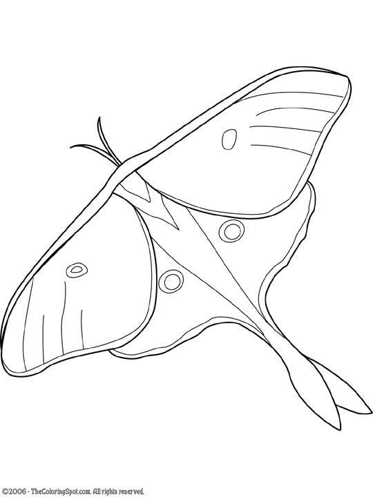Luna Moth Jpg 540 720 Pixels Luna Moth