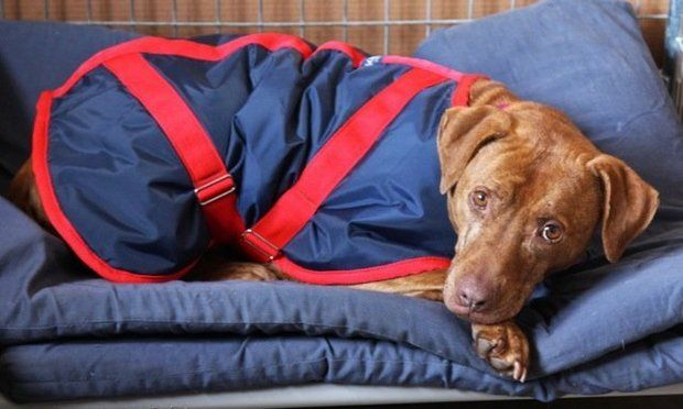 Help your pet stay warm during the winter months