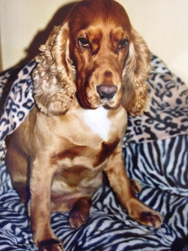 how to help a dog recover from pancreatitis