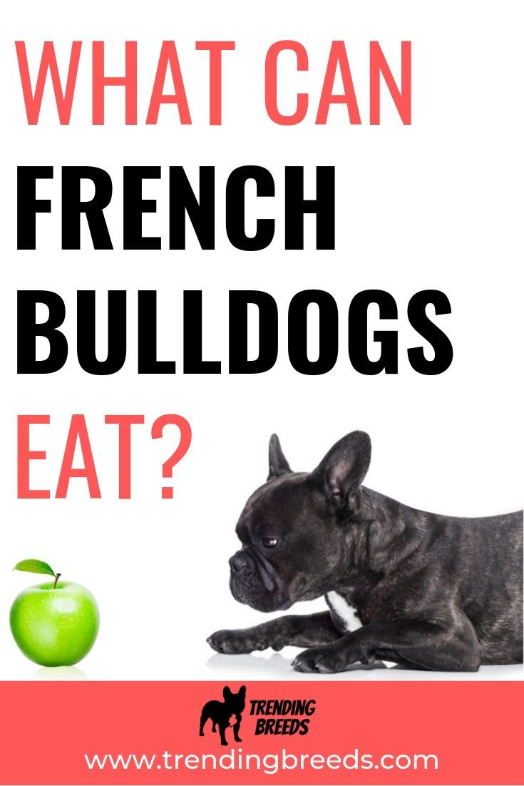 What Can French Bulldogs Eat? (And Foods They Can't Eat)