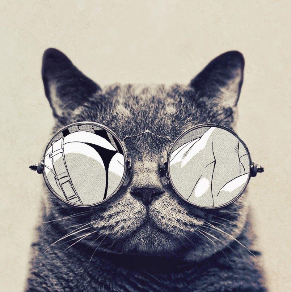 Нов, картинки кошки в очках на аву